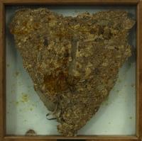 Objektkasten,Harz,Pflanzenreste, 50x50x5 cm